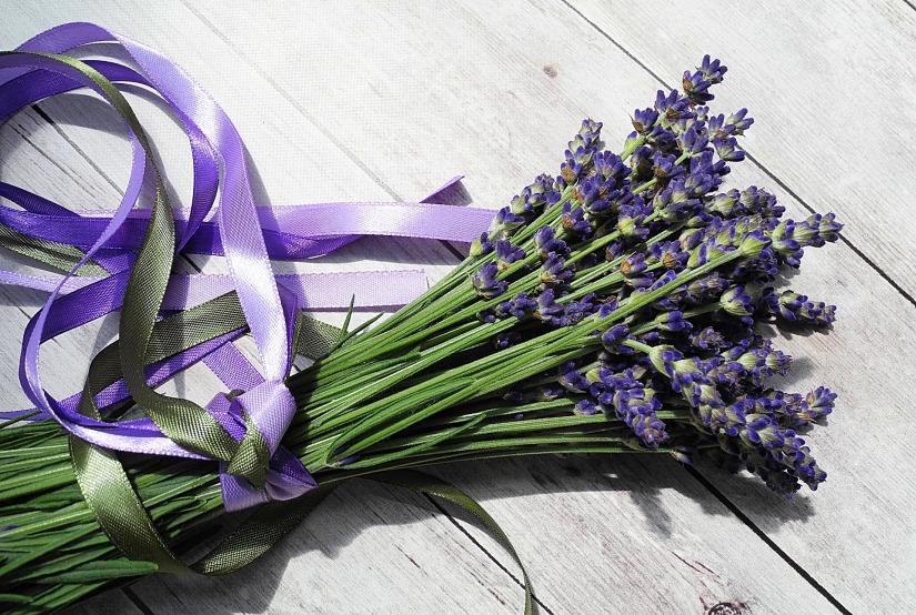 lavender-2395071_1920 copy