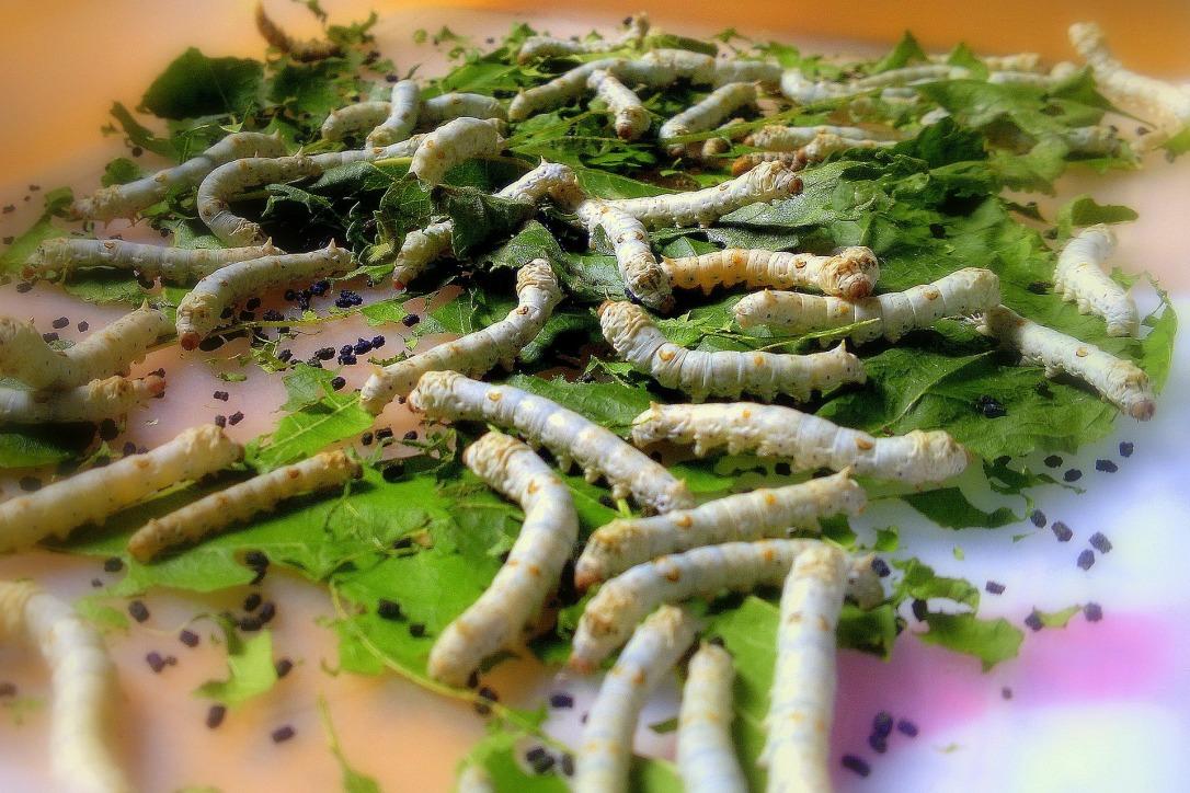 silkworm-109059_1920 copy