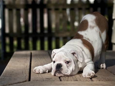 yoga-down-dog-2