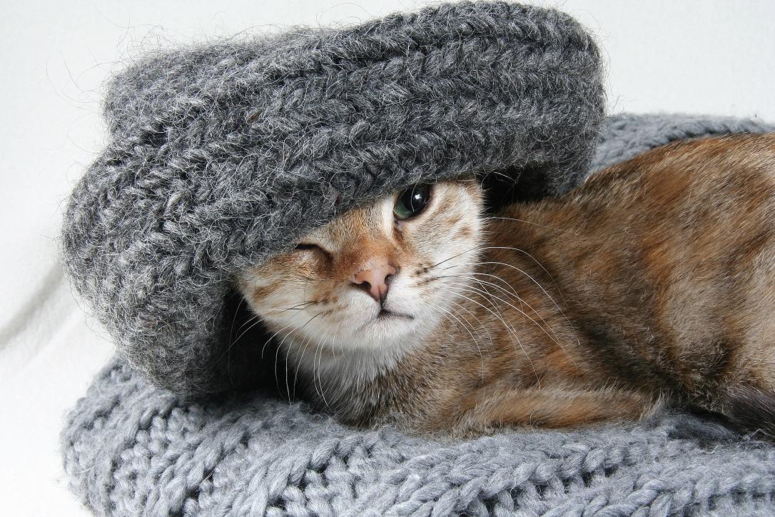 cat-2201460_1920 copy
